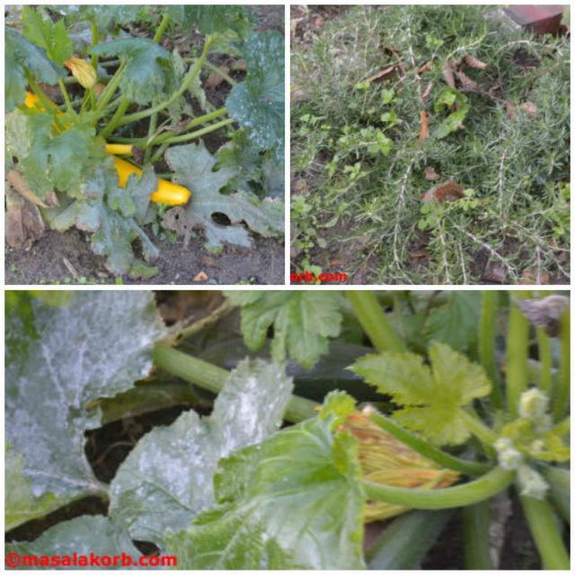 My garden Veggies_collage1